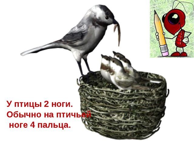 ФОРМА ПАЛЬЦЕВ И ДЛИНА НОГ У ПТИЦ РАЗНАЯ.