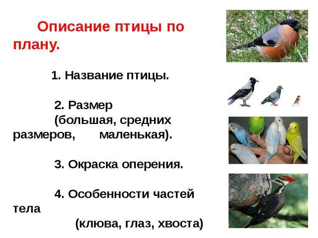 И петь не поёт, и летать не летает. За что же тогда его птицей считают?