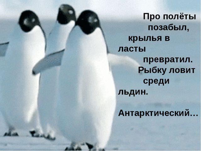Пингвин не может летать. Крылья использует, как ласты, в воде и под водой. С...