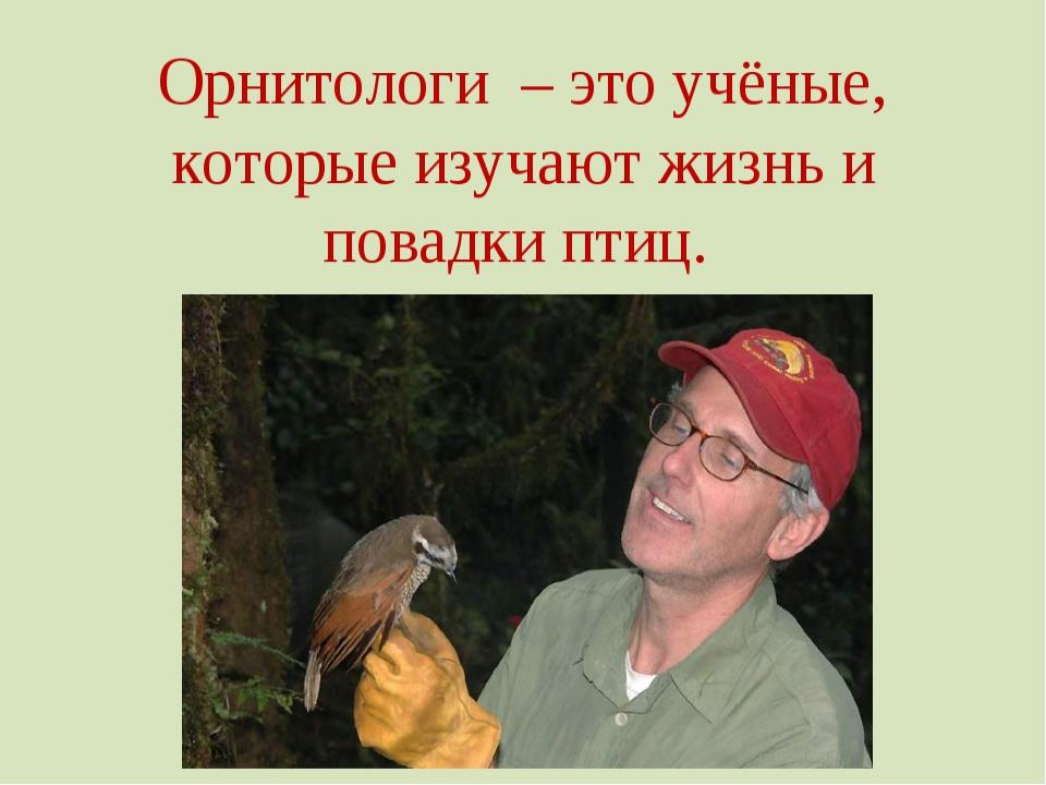 ←ГОЛОВА ШЕЯ→ ←КЛЮВ ←ТУЛОВИЩЕ ХВОСТ→ ←НОГИ Строение птицы ГОЛУБЬ крыло