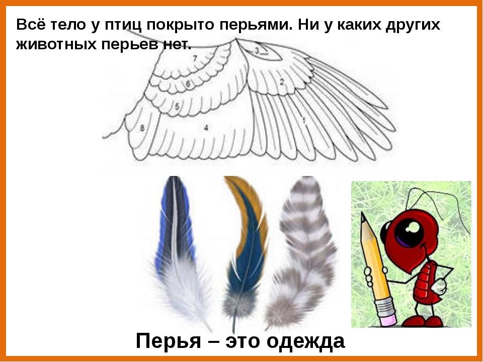 Перья птиц разные по форме, цвету, размеру.