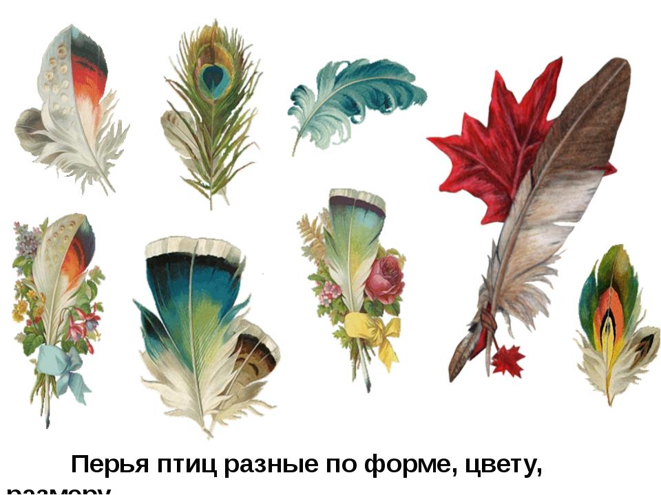 Строение пера птицы.
