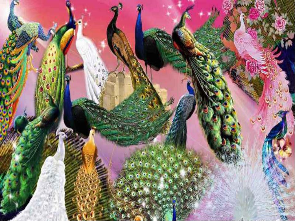 Яркая окраска перьев привлекает внимание, служит украшением и нужна для маск...