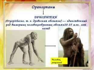 Орангутаны ДРИОПИТЕКИ (Dryopithecus, т. е. древесная обезьяна) — единственный