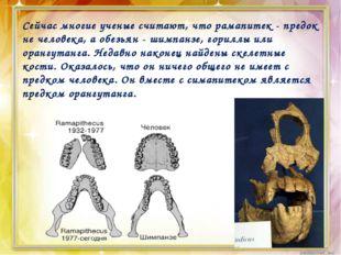 Сейчас многие ученые считают, что рамапитек - предок не человека, а обезьян -