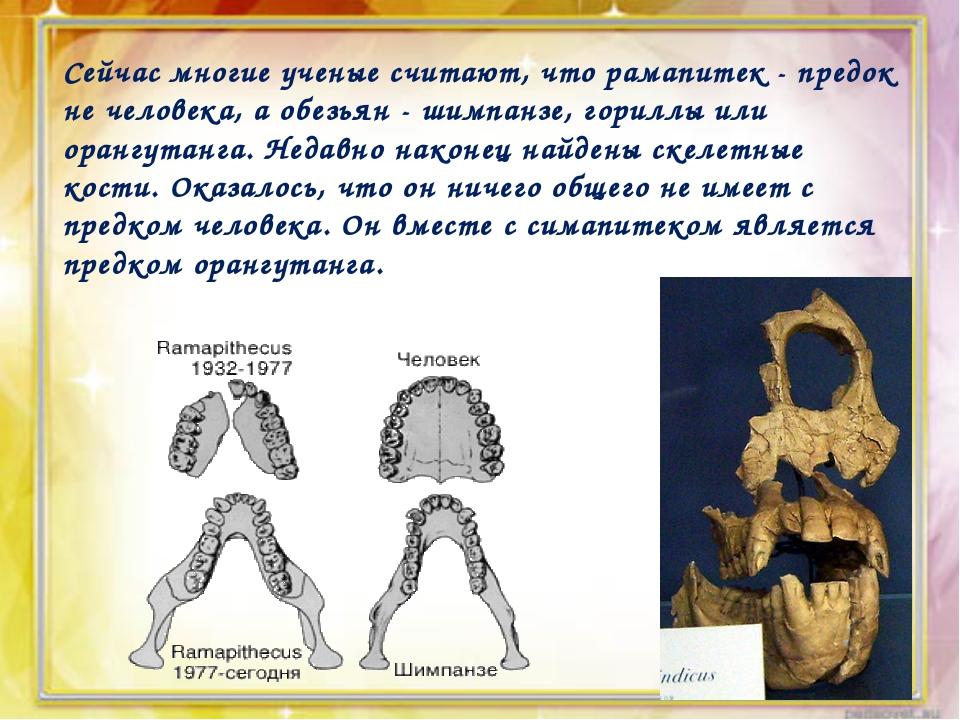 Сейчас многие ученые считают, что рамапитек - предок не человека, а обезьян -...