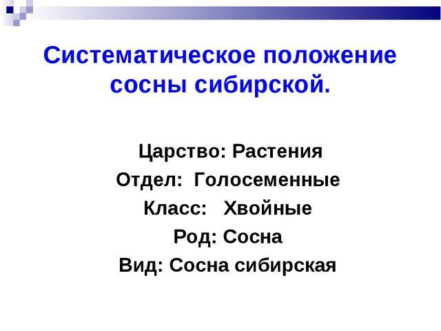 Систематическое положение сосны сибирской. Царство: Растения Отдел: Голосемен...