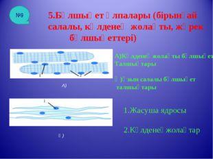 5.Бұлшықет ұлпалары (бірынғай салалы, көлденең жолақты, жүрек бұлшықеттері) А