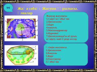 Жаңа сабақ: Жасуша құрылысы. Ұлпалар Жануар жасушасы 1.Сыртқы қабықша 2.Цитоп