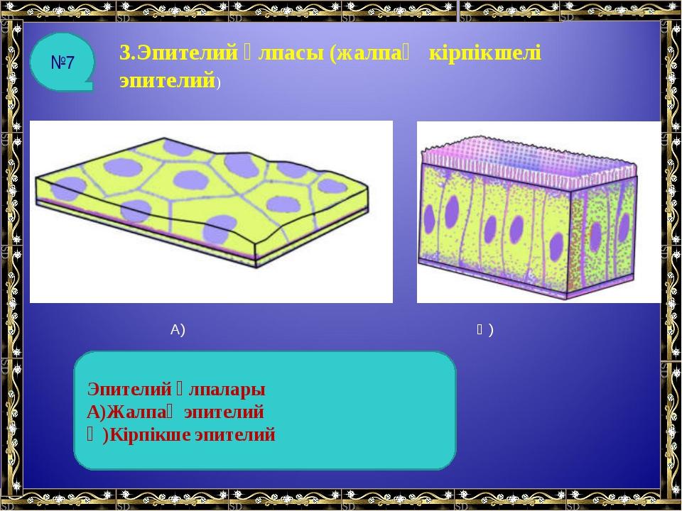3.Эпителий ұлпасы (жалпақ кірпікшелі эпителий) А) Ә) Эпителий ұлпалары А)Жалп...
