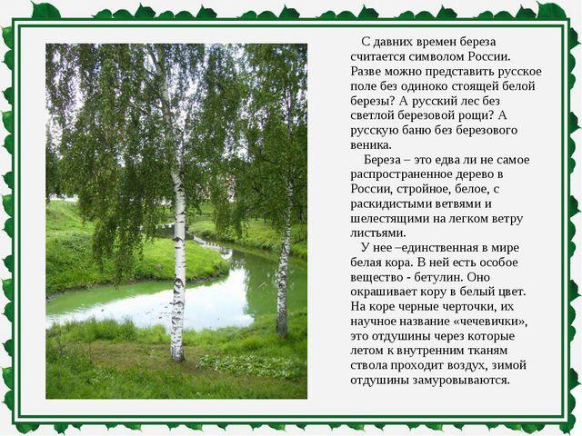 С давних времен береза считается символом России. Разве можно представить ру...