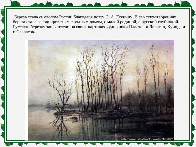 Береза стала символом России благодаря поэту С. А. Есенину. В его стихотворе...