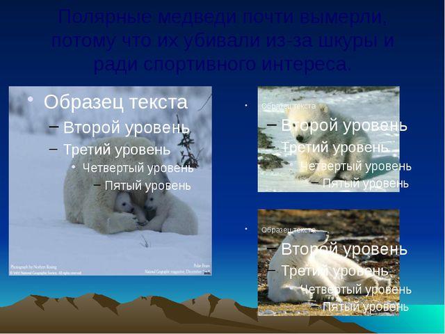 Полярные медведи почти вымерли, потому что их убивали из-за шкуры и ради спор...