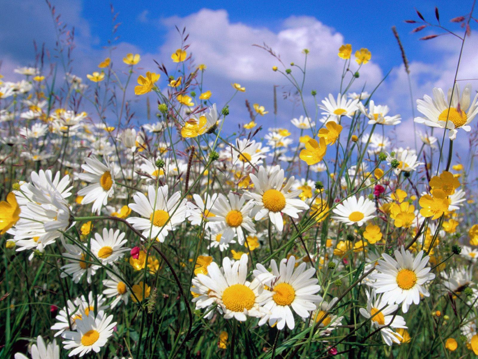 http://4.bp.blogspot.com/-Ul4iR-sOg_o/Tb8xDdvVUXI/AAAAAAAAAHg/kSpv-N1aL3c/s1600/p8-164-wallpaper-fleurs.jpg
