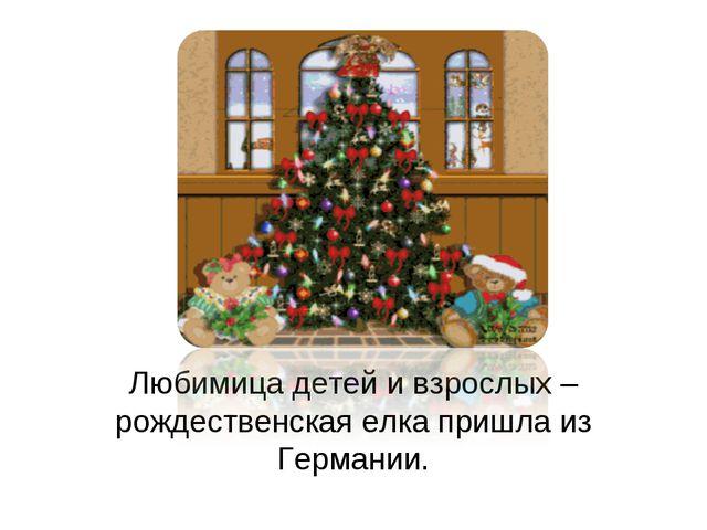 Любимица детей и взрослых – рождественская елка пришла из Германии.