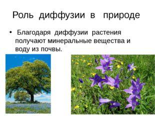 Роль диффузии в природе Благодаря диффузии растения получают минеральные веще