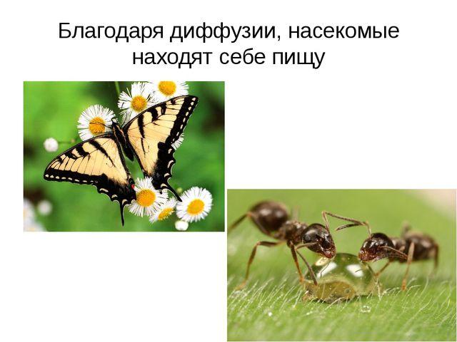 Благодаря диффузии, насекомые находят себе пищу