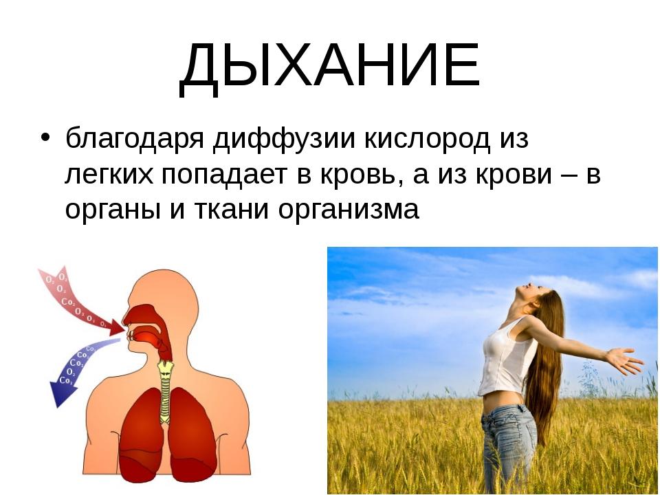 ДЫХАНИЕ благодаря диффузии кислород из легких попадает в кровь, а из крови –...