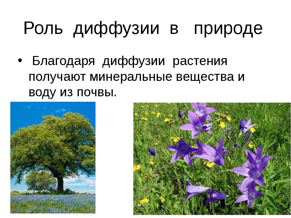 Роль диффузии в природе Благодаря диффузии растения получают минеральные веще...