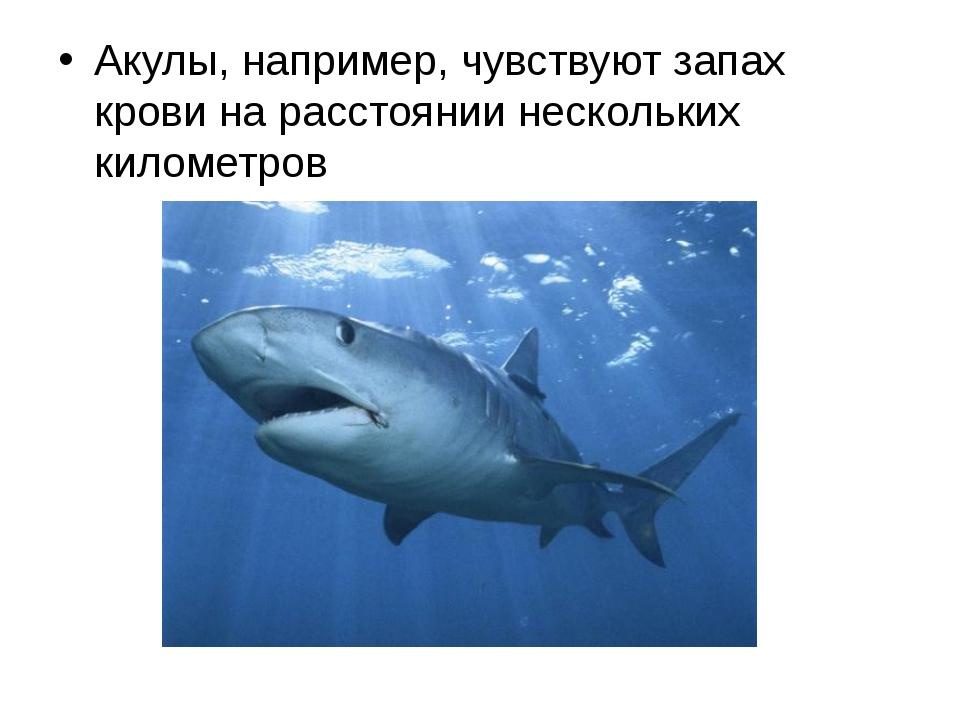 Акулы, например, чувствуют запах крови на расстоянии нескольких километров