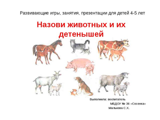 Назови животных и их детенышей Выполнила: воспитатель МБДОУ № 36 «Сосенка» Ма...