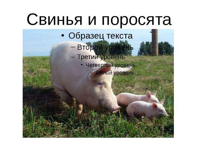 Свинья и поросята