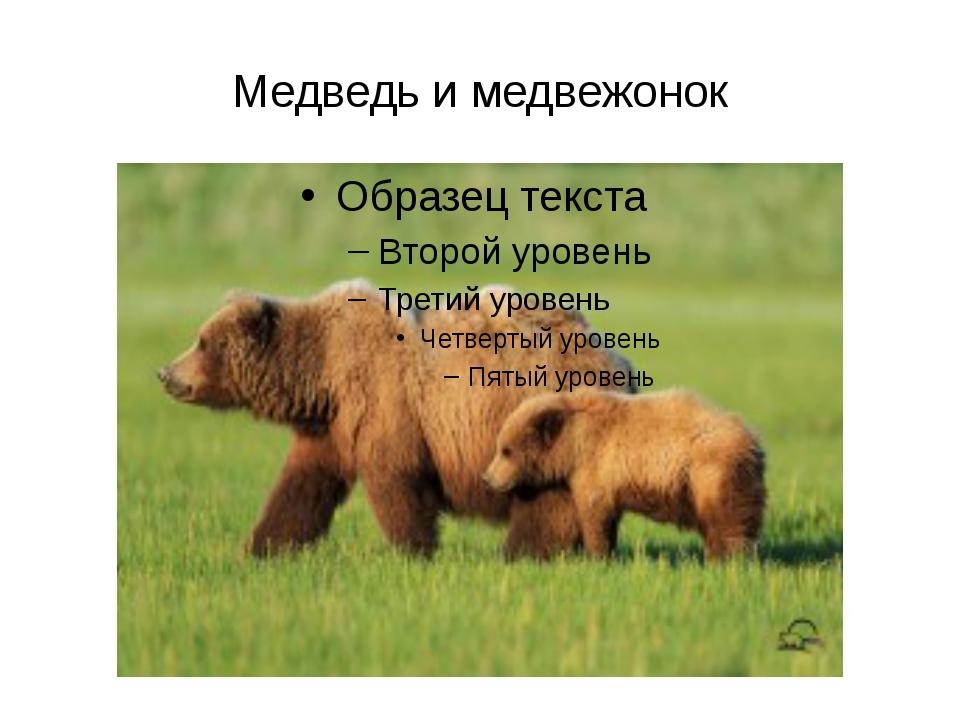Медведь и медвежонок