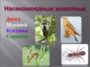 Дятел Муравей Кукушка Стрекоза