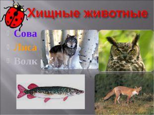 Сова Лиса Волк