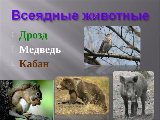 Дрозд Медведь Кабан