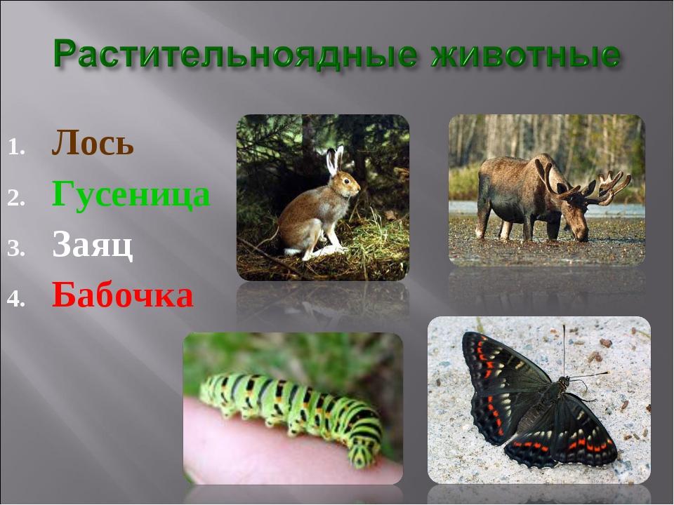 Лось Гусеница Заяц Бабочка