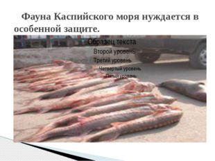 Фауна Каспийского моря нуждается в особенной защите.