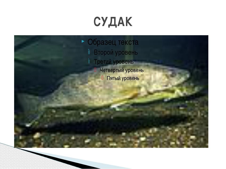 СУДАК