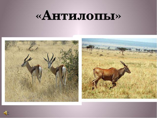 «Антилопы»