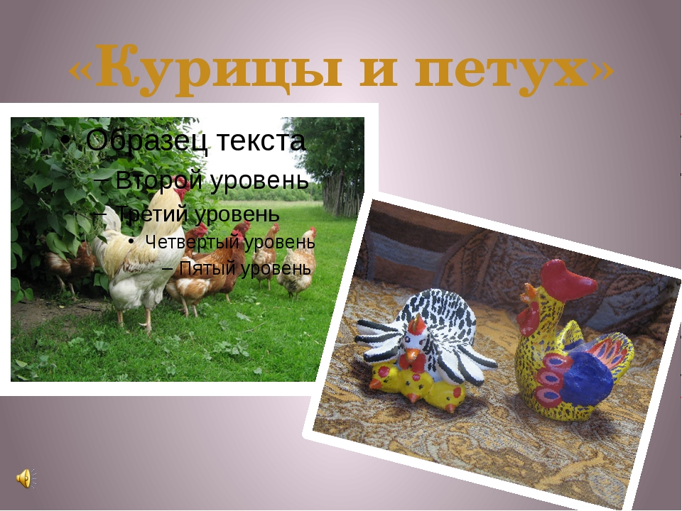 «Курицы и петух»