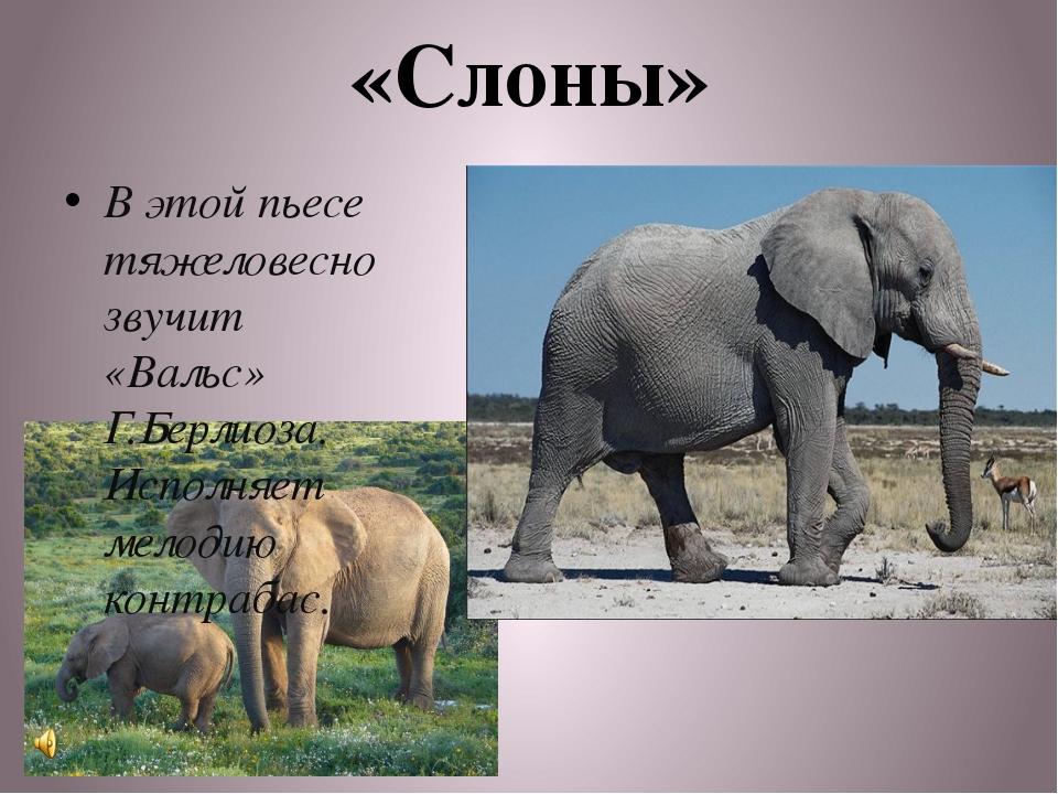 «Слоны» В этой пьесе тяжеловесно звучит «Вальс» Г.Берлиоза. Исполняет мелодию...