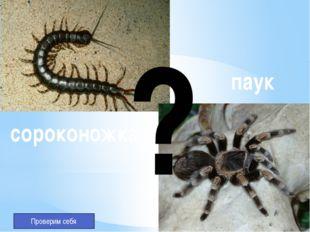 Нет не насекомые Не 6 ног