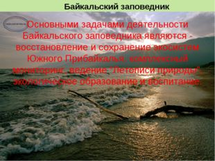 Основными задачами деятельности Байкальского заповедника являются - восстанов