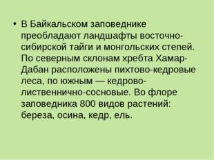 В Байкальском заповеднике преобладают ландшафты восточно-сибирской тайги и мо