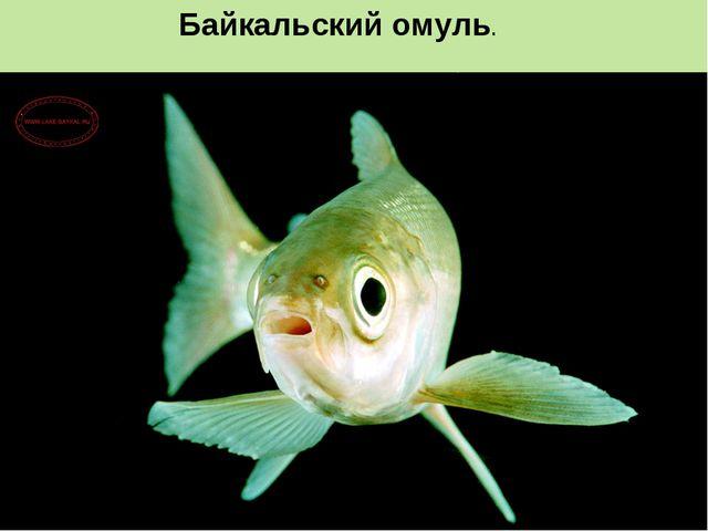 Байкальский омуль.
