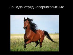 Лошади- отряд непарнокопытных