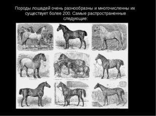 Породы лошадей очень разнообразны и многочисленны их существует более 200. Са