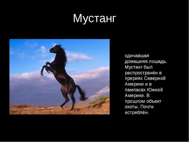 Мустанг Муста́нг — одичавшая домашняя лошадь. Мустанг был распространён в пре...