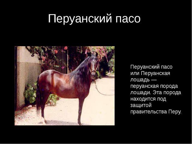 Перуанский пасо Перуанский пасо или Перуанская лошадь — перуанская порода лош...