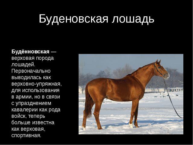 Буденовская лошадь Будённовская— верховая порода лошадей. Первоначально выво...