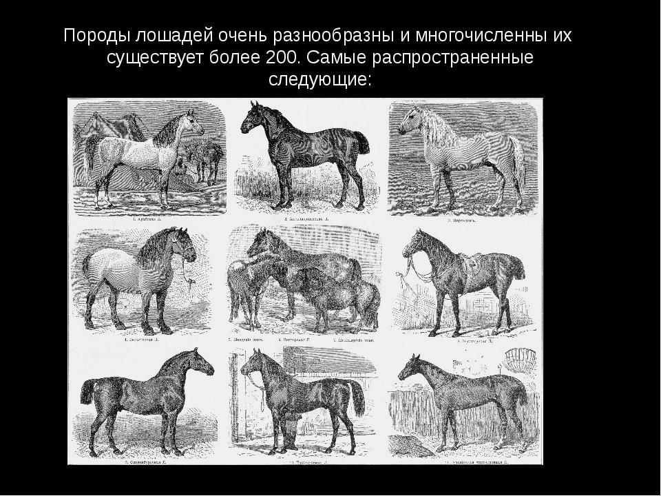 Породы лошадей очень разнообразны и многочисленны их существует более 200. Са...