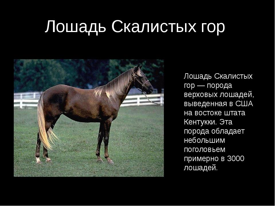 Лошадь Скалистых гор Лошадь Скалистых гор — порода верховых лошадей, выведенн...