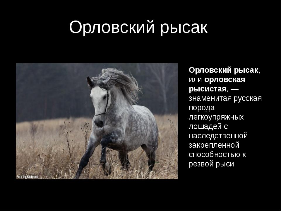 Орловский рысак Орловский рысак, или орловская рысистая,— знаменитая русская...