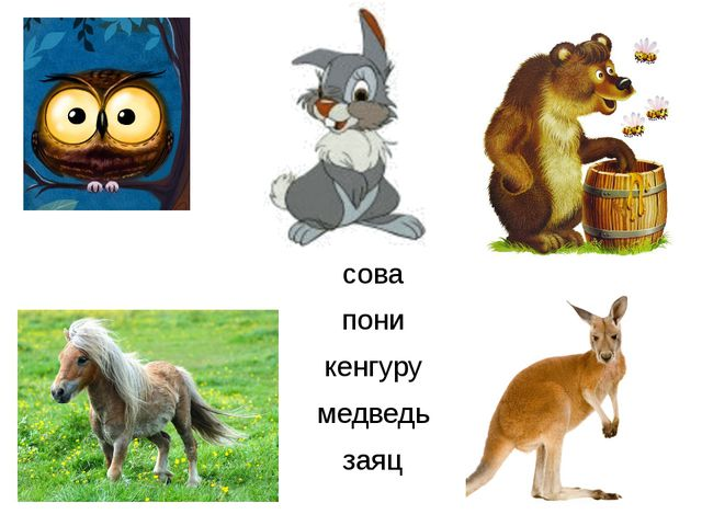 сова пони кенгуру медведь заяц