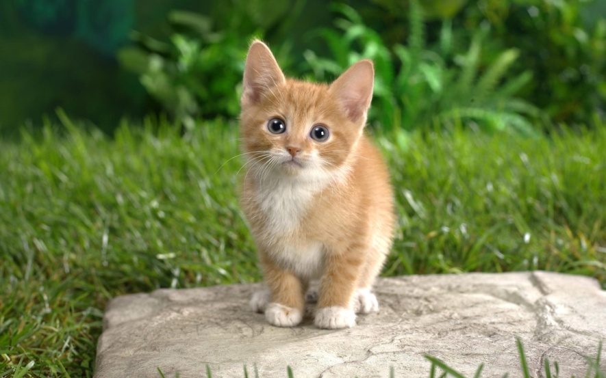 C:\Users\Артур\Desktop\u17782_3720_cats_28.05.2010_056.jpg